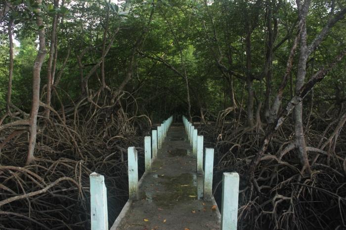 mangrove trail TN Baluran